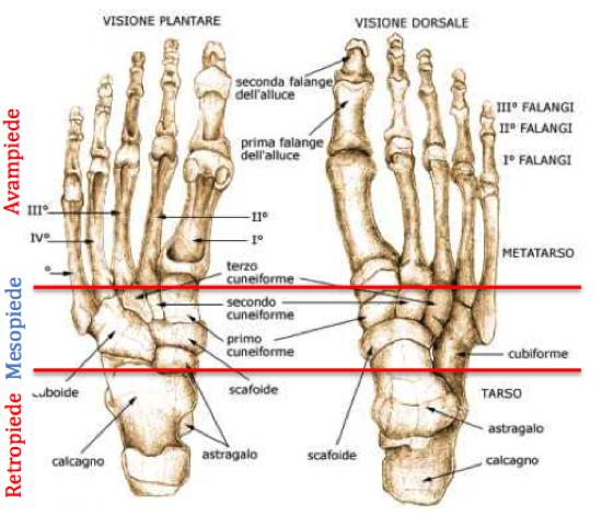 Chirurgia del piede dott marco bove for Piede quadrato di 20x20